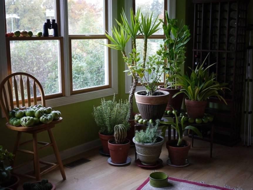 quali-piante-scegliere-per-arredare-un-ingresso