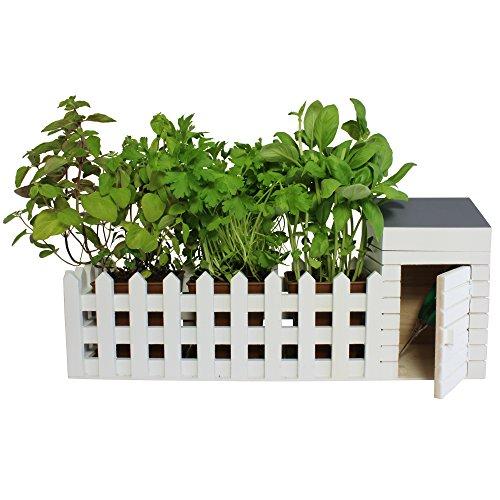 Le migliori piante per arredare bagno e cucina. - Questioni di ...