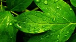 green-nature-backgrounds-17257-17813-hd-wallpapers
