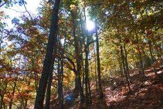 Colores del otoño en el Hayedo de Montejo