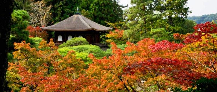 Los colores del otoño tiñen por completo los templos de Kioto, sin duda la mejor época para visitar la ciudad japonesa