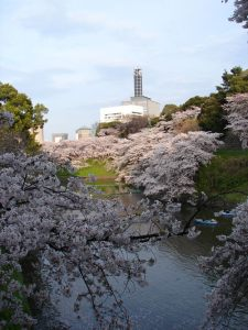 Parque Kitanomaru durante el hanami