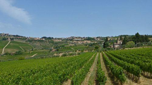 Viñedos de la Toscana, donde se produce la Denominación de Origen Chianti Colli Fiorentini, qué comprar en Florencia