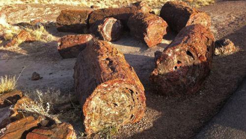 Conjunto de troncos fosilizados de la ruta Long Logs Trail, en Petrified Forest