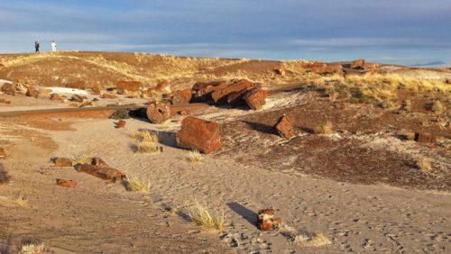 Troncos fosilizados de Petrified Forest o Bosque Petrificado, en Arizona