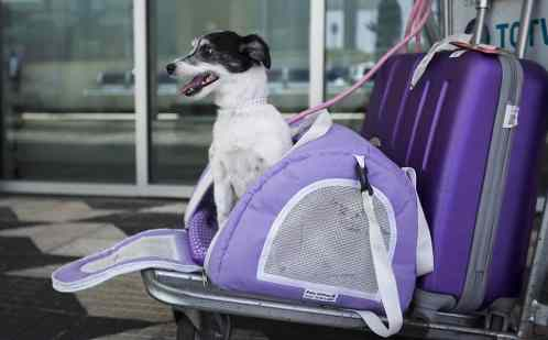Animais de estimação que viajavam com seus donos foram impedidos de ingressar no Brasil por falha da empresa aérea