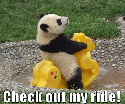 Panda Dog Toy