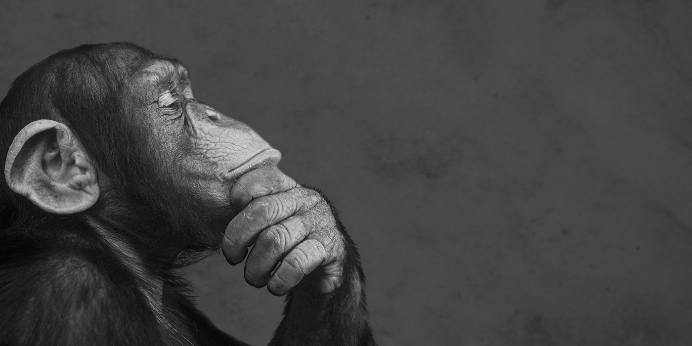 Why do only human apes ask questions?