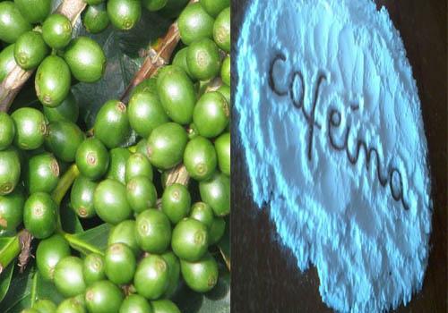 extracto-de-granos-cafe-verde-y-cafeina
