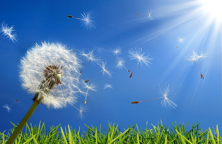All You Need to Know About Allergies 1