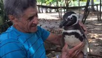 Penguin Always Comes Home To The Man Who Saved His Life