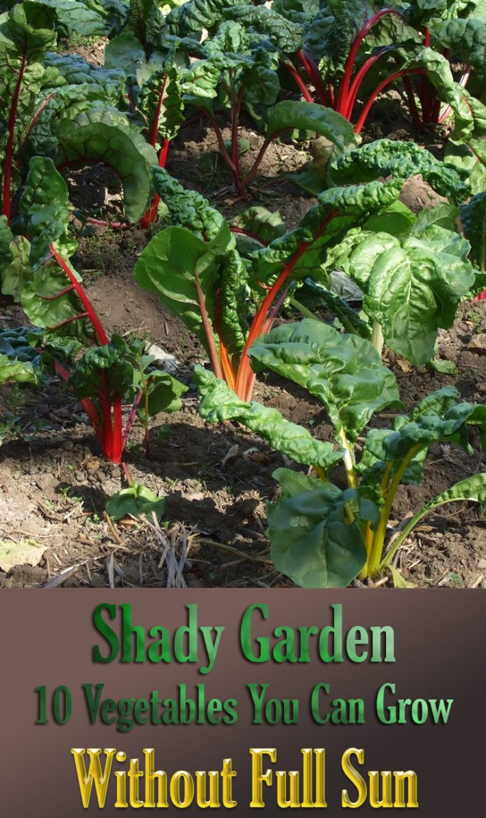 Shady Garden: 10 Vegetables You Can Grow Without Full Sun