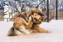 Dogs - How to Keep Fleas Away