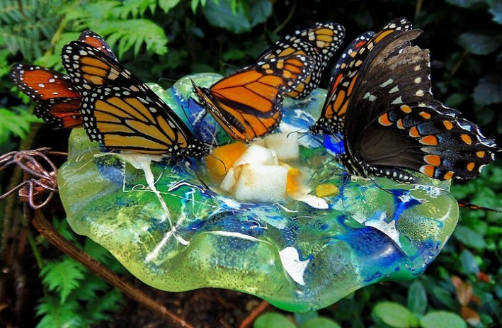 Butterfly Feeder in Garden