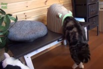 Funny Cats vs Small Spaces