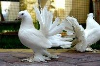 Do birds need grit?