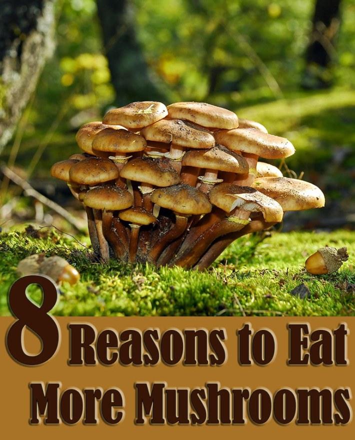8 Reasons to Eat More Mushrooms