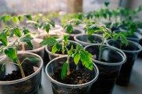 Common Indoor Seeding Mistakes