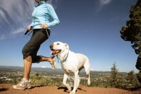 The Dos and Don'ts of Running With Your Dog