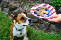 Fourth of July With Pets