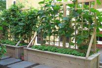How to Grow Plants on Trellises