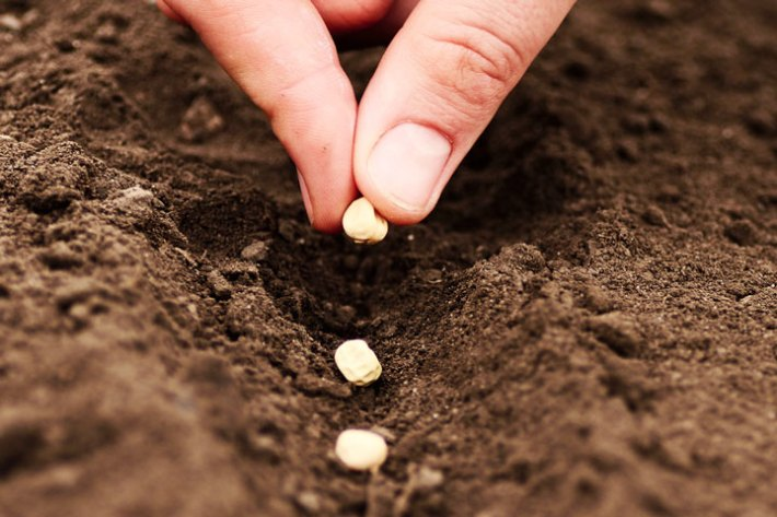 Fall Seed Planting