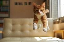 Funny Cat Video - Ninja Cat Can Bounce Off Walls