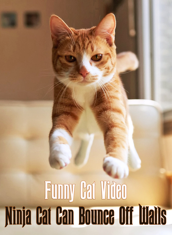 Image of: Johnartist12 Quiet Cornerfunny Cat Video Ninja Cat Can Bounce Off Walls Quiet Corner Quiet Corner Quiet Cornerfunny Cat Video Ninja Cat Can Bounce Off Walls