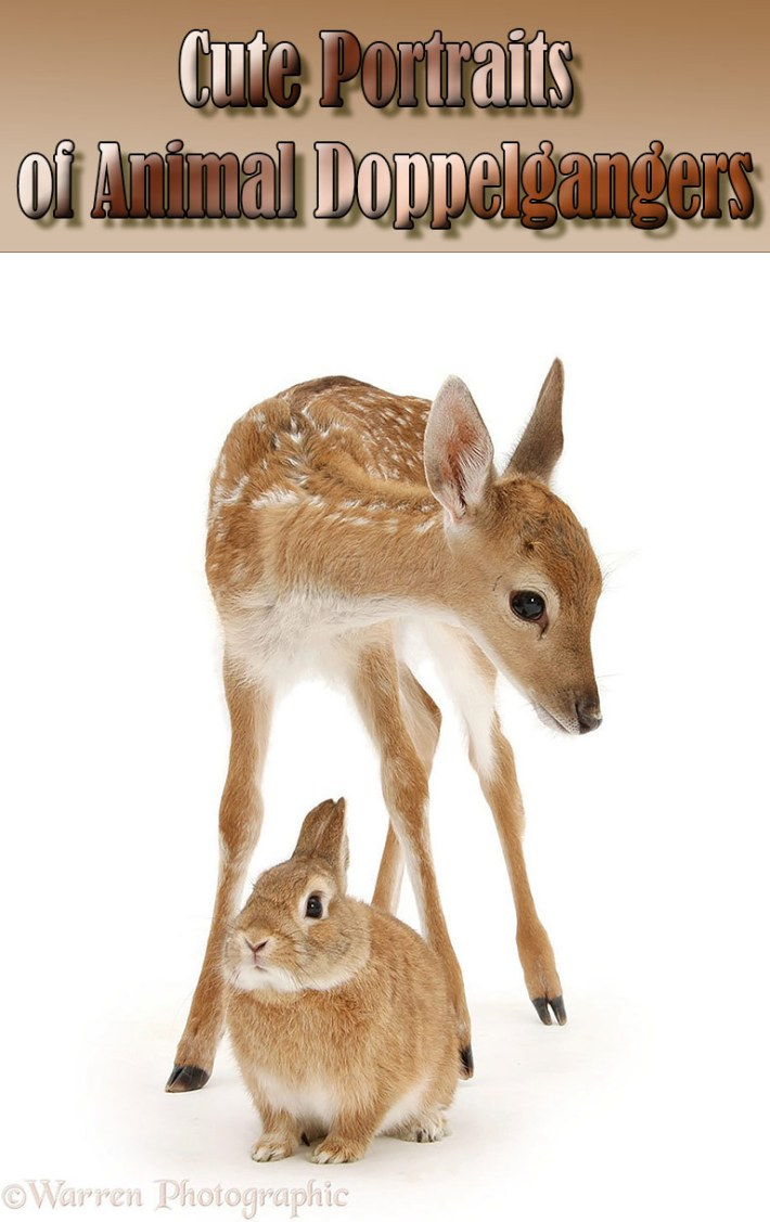 Cuteness Alert! – Cute Portraits of Animal Doppelgangers