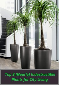 Top 3 (Nearly) Indestructible Plants for City Living