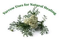 Yarrow Uses for Natural Healing