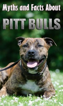 Pit Bulls: Myths and Facts About Mighty Pit Bulls