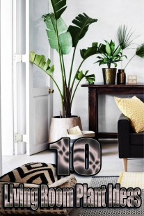 10 Living Room Plant Ideas