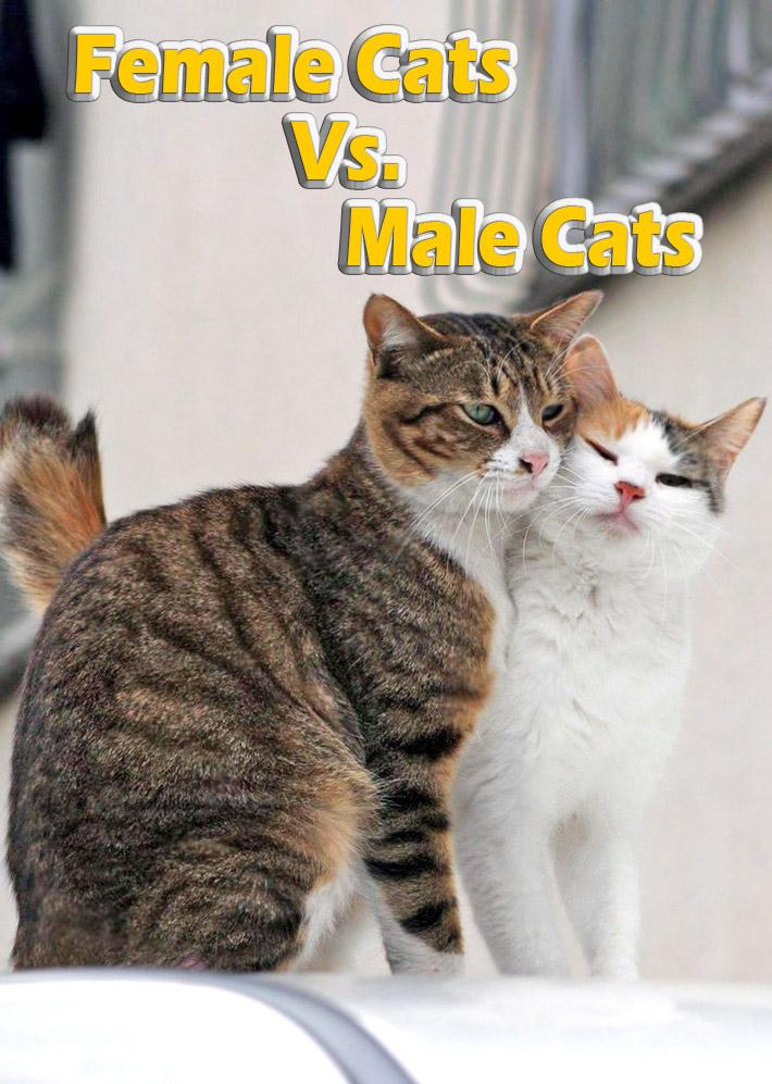 Female Cats Vs. Male Cats