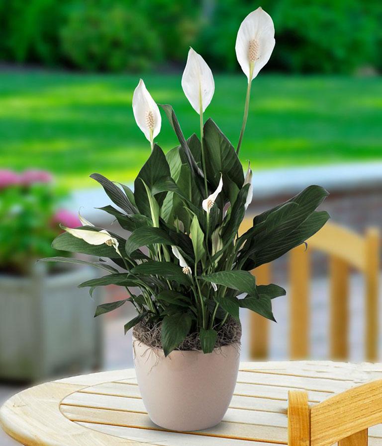 10 Low Maintenance Houseplants for Black-Thumb Gardeners - Quiet Corner