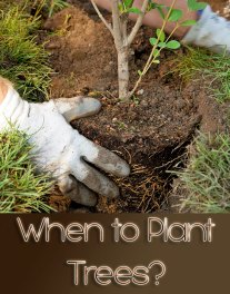 When to Plant Trees?