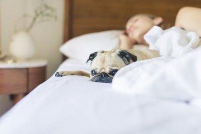 Sleeping with Tinnitus