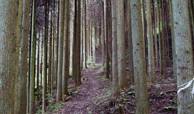 Okutama – hiking