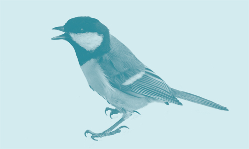 Bird image for Quietroom blog