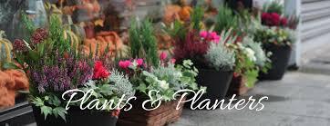 Flowers in Planter winder, Ga