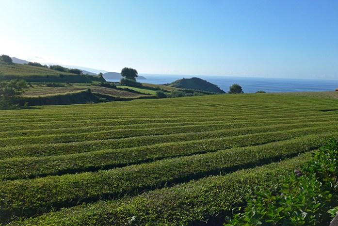 Plantações de Chá da Gorreana, Roteiro de mota pela Ilha de São Miguel