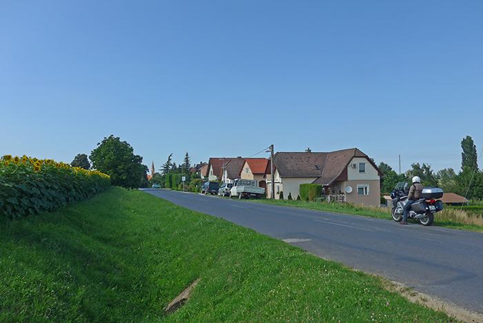 Plantações de girassol. Hungria