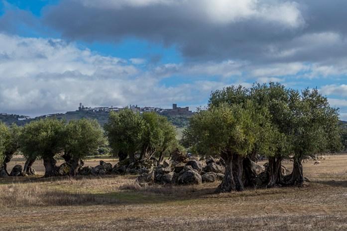 Castelo do Monsaraz, Olival da Pêga