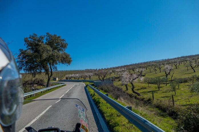 Amendoais pela estrada N222 Freixo de Numão-Foz Côa
