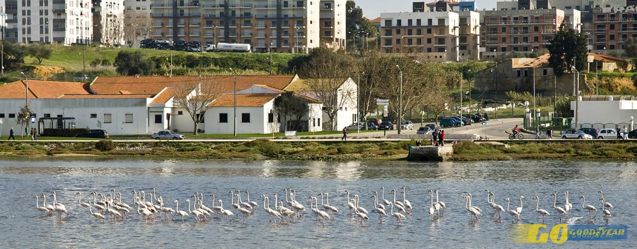 flamingos-baia-seixal