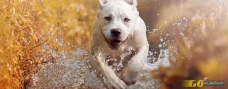 7 hotéis que aceitam cães: eles também gostam do verão