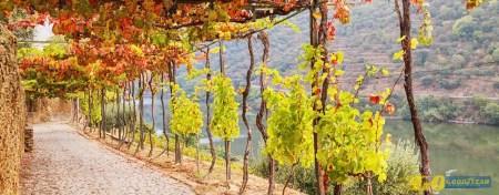 Outono romântico: 5 miradouros para a estação dourada