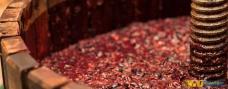 Destinos da Água-pé: onde encontrar o vinho novo do São Martinho