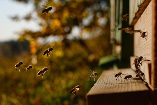 honey-bee-2860488_1280
