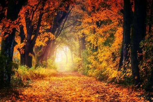 autumn-3186876_1920